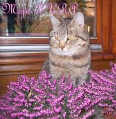 Moja Bura - niestety zniknęła - była z nami 4 lata