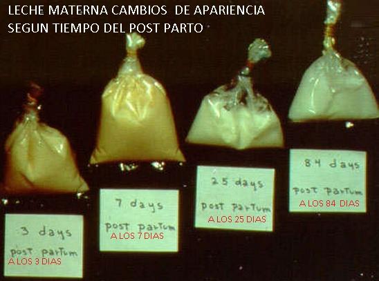 LECHE MATERNA DE CALOSTRO A LECHE MADURA