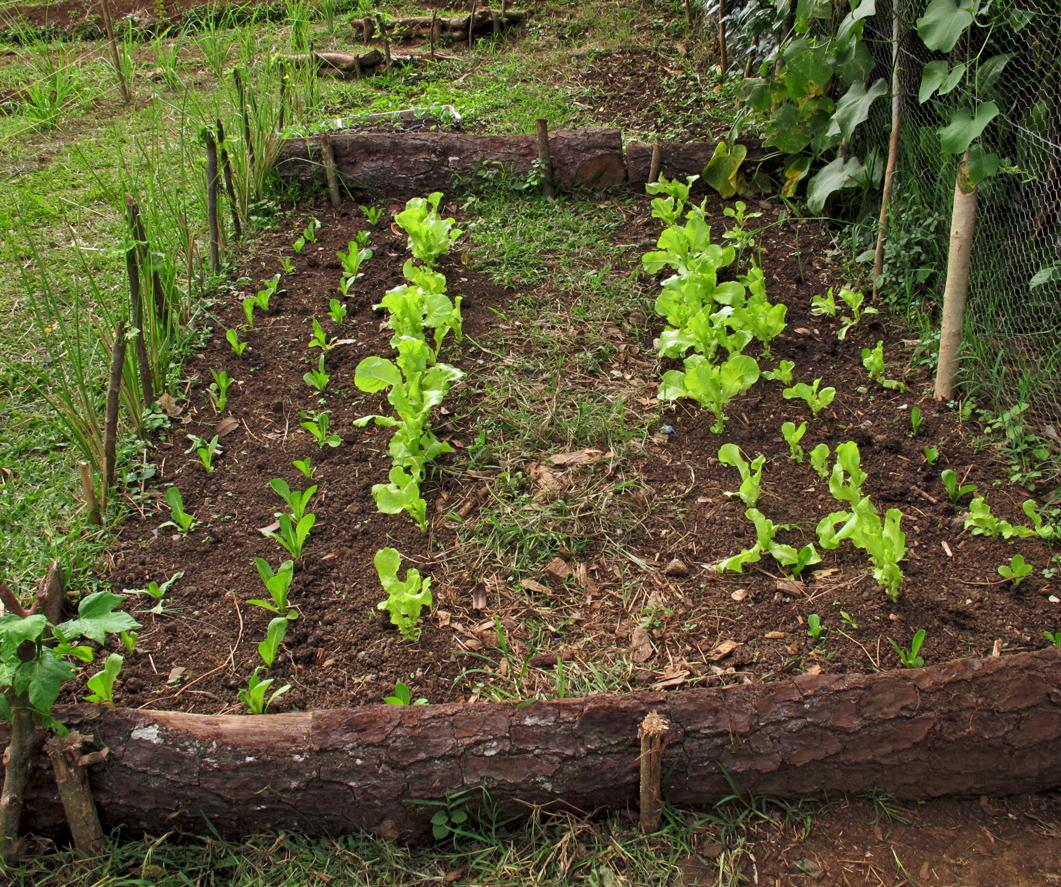 dried papaya leaves as organic mulch Title, dried papaya leaves as organic mulch for tomato plants call no(s), ip  291 bb 2006 location(s), stii main author, acayen, ma theresa c.
