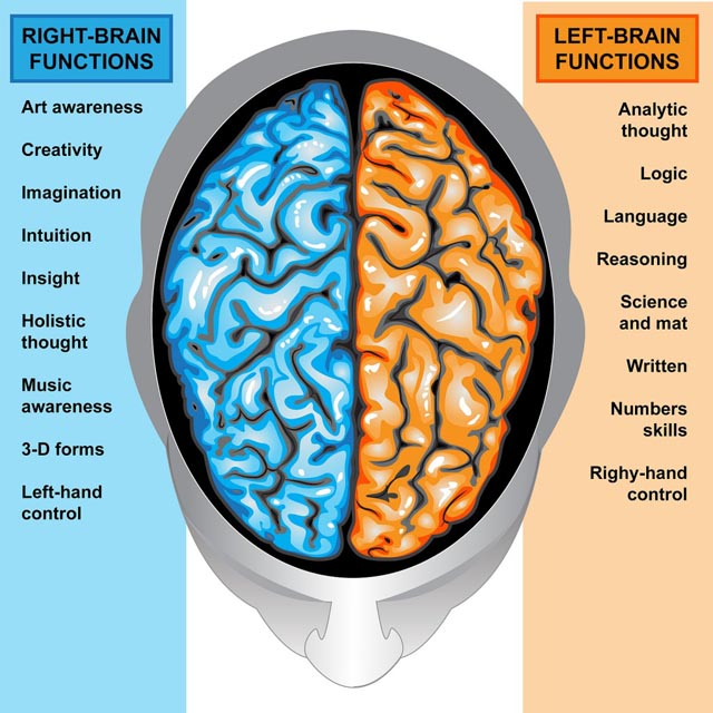 Here Are 23 Facts About Left-Handed People That You Didn't Know About. The Last One Surprised Me. - They mostly use the right side of the brain.