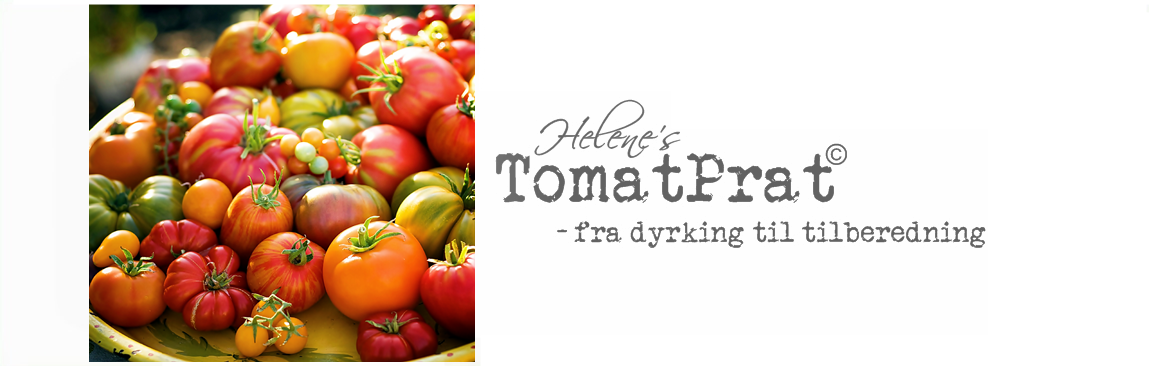 MY NORWEGIAN TOMATO BLOG: