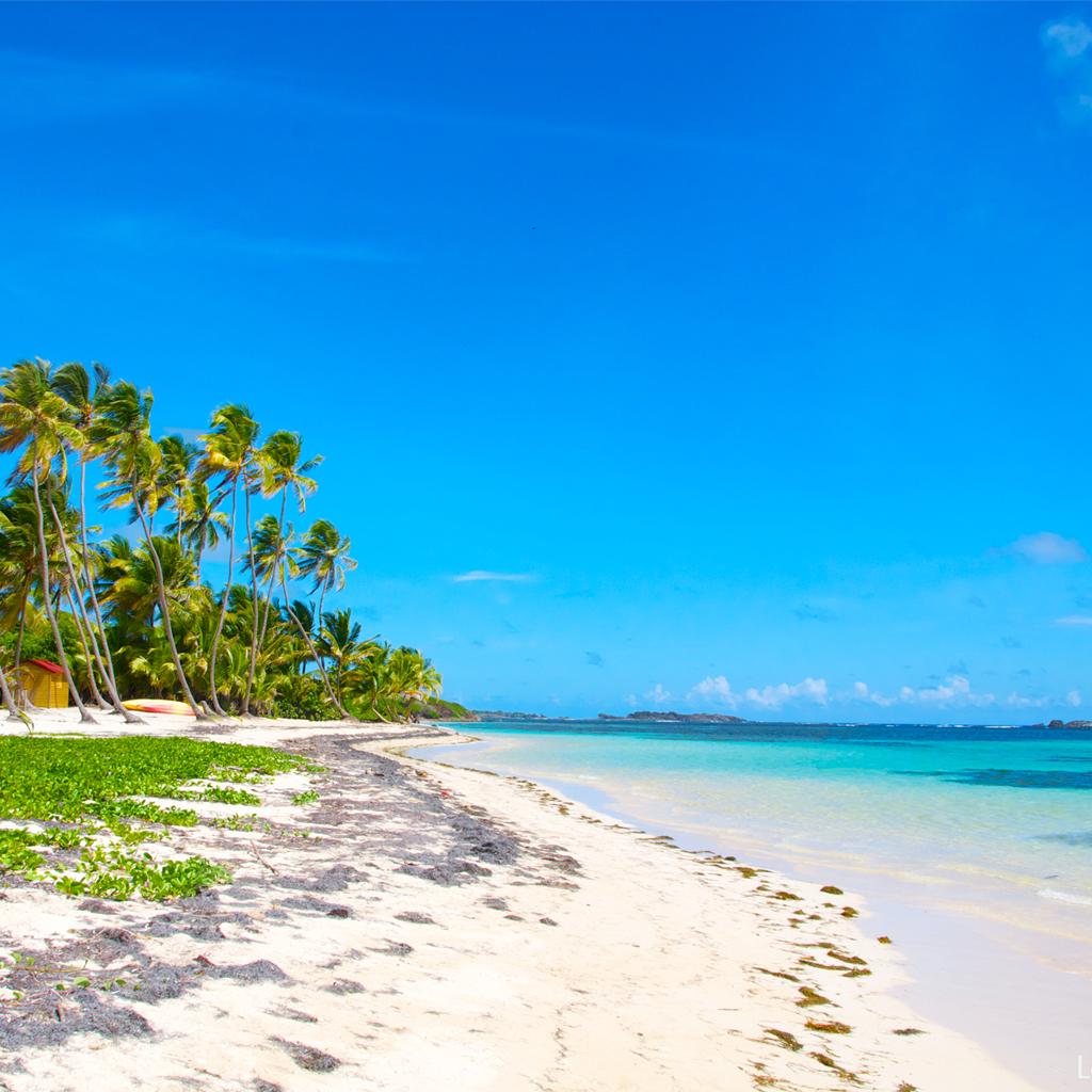 http://2.bp.blogspot.com/-6Iuzs_RU7gc/UNw8tNE9eoI/AAAAAAAAG-I/L-xCpHp6T5Q/s1600/fond-d\'e%CC%81cran-ipad-plage-cocotiers-Martinique.jpg