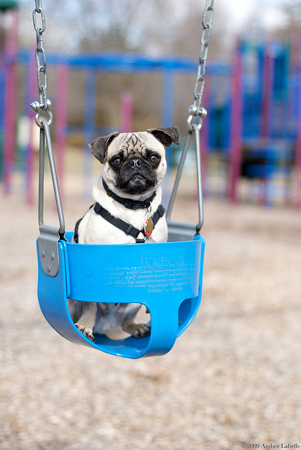 Cute Swinging Dogs Damn Cool Pictures