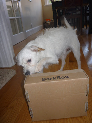 Freckles the Dog Barkbox