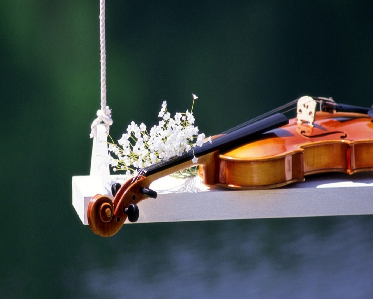 Violin instruments in the swing - Music Violins Collection