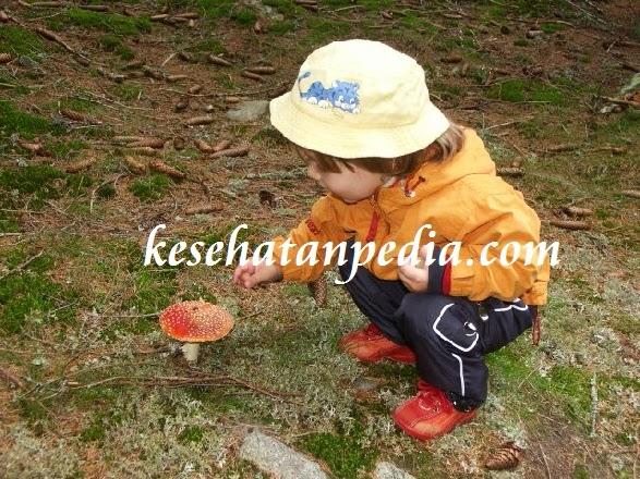 Manfaat Jamur bagi Bayi dan Anak Balita