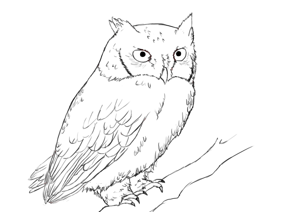 How To Draw Owl Feather