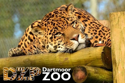 Dartmoor Zoological Park In California