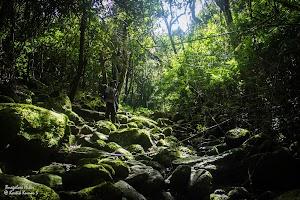 Kumara Parvatha trekking trail, Beedahalli side