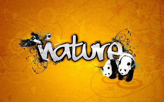Nature Birds Animals Abstract HD Wallpaper