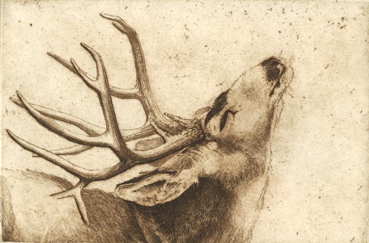 Sandy Scott Art 236 Beyond My Window Mule Deer