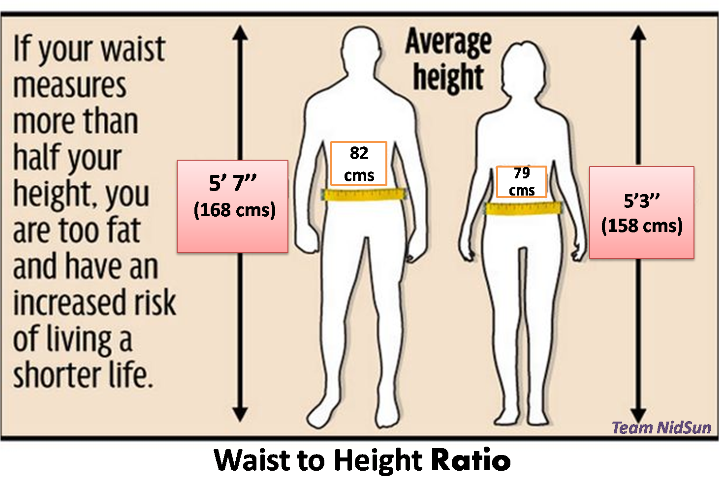 Waist to hip ratio messen