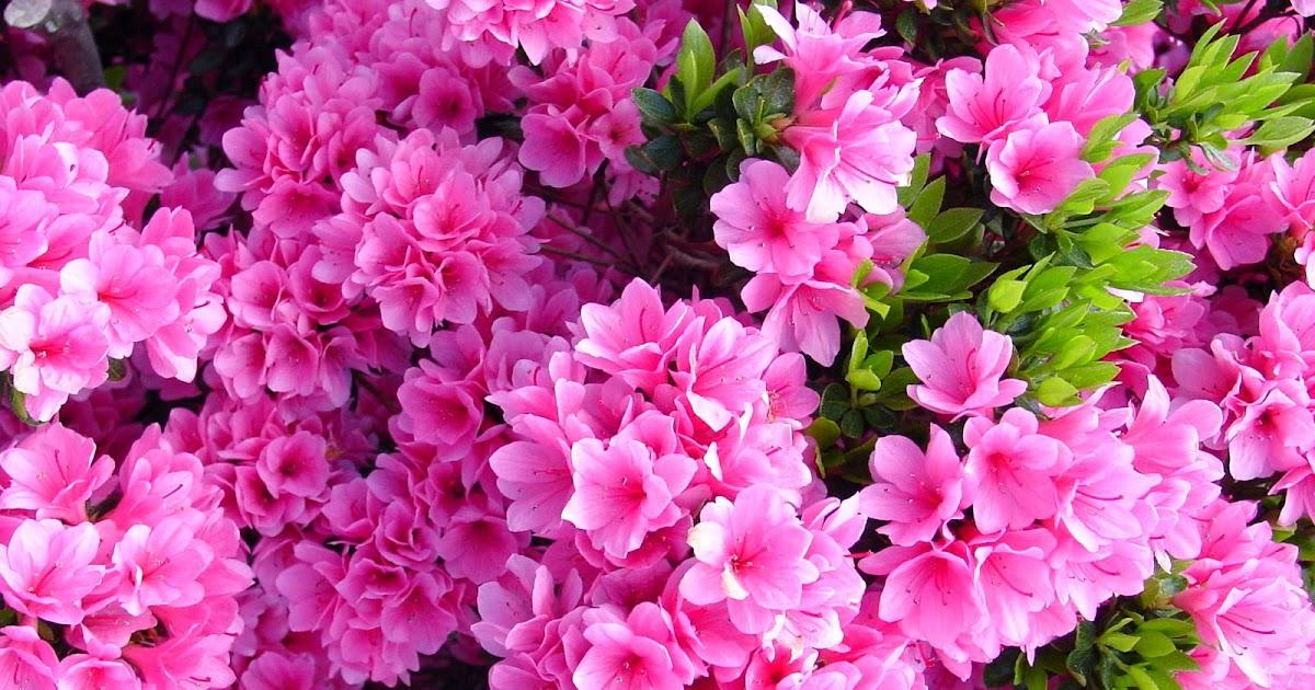 Feng shui en espa ol feng shui hogar renueva el chi tu hogar con la limpieza de primavera - Feng shui hogar ...