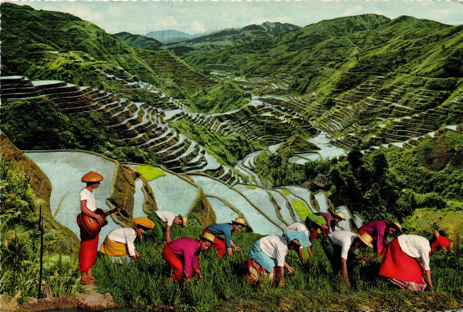Farming from the past postally yours for The terraces 2
