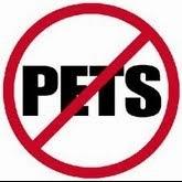 Não aceitamos animais!