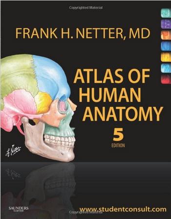 Acland Anatomy Videos Free 2791123 Togelmayafo