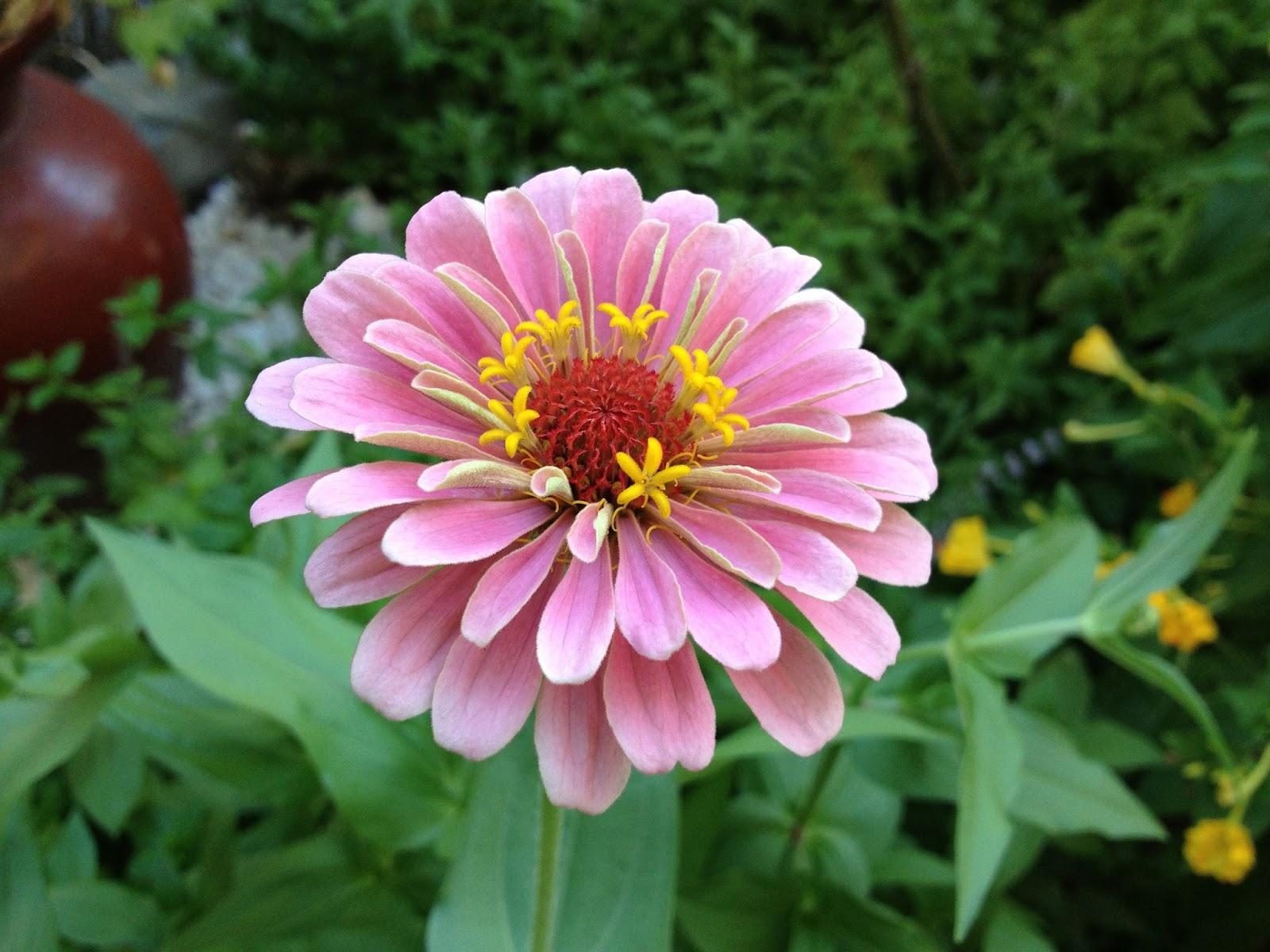 Arte y jardiner a flores y plantas de arte y jardiner a for Jardines con gravilla de colores