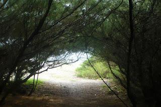 objek wisata bantul, pantai, pantai di yogyakarta, pantai goa cemara,