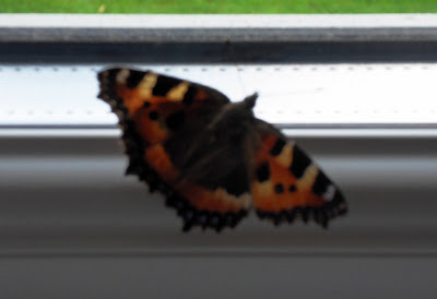 Butterfly on my office windowsill