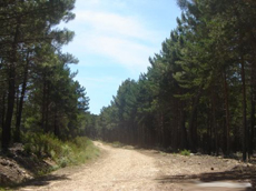 el sueño de la carrera por un camino entre pinares que luego se transformará en un paisaje artificial de pista cubierta