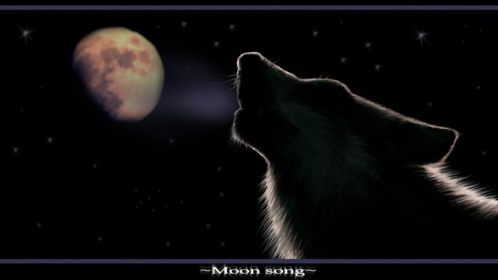http://2.bp.blogspot.com/-6M1yCZOiVPg/TpVc8F56jII/AAAAAAAADBM/t7JTaAO19cM/s1600/fox-wallpaper.jpg