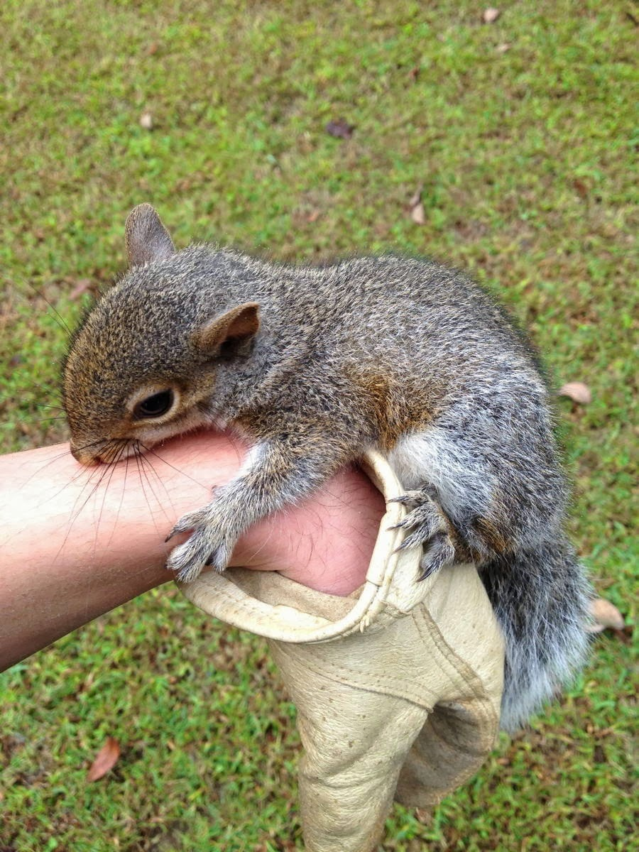 Funny animals of the week - 28 February 2014 (40 pics), squirrel hugs human hand