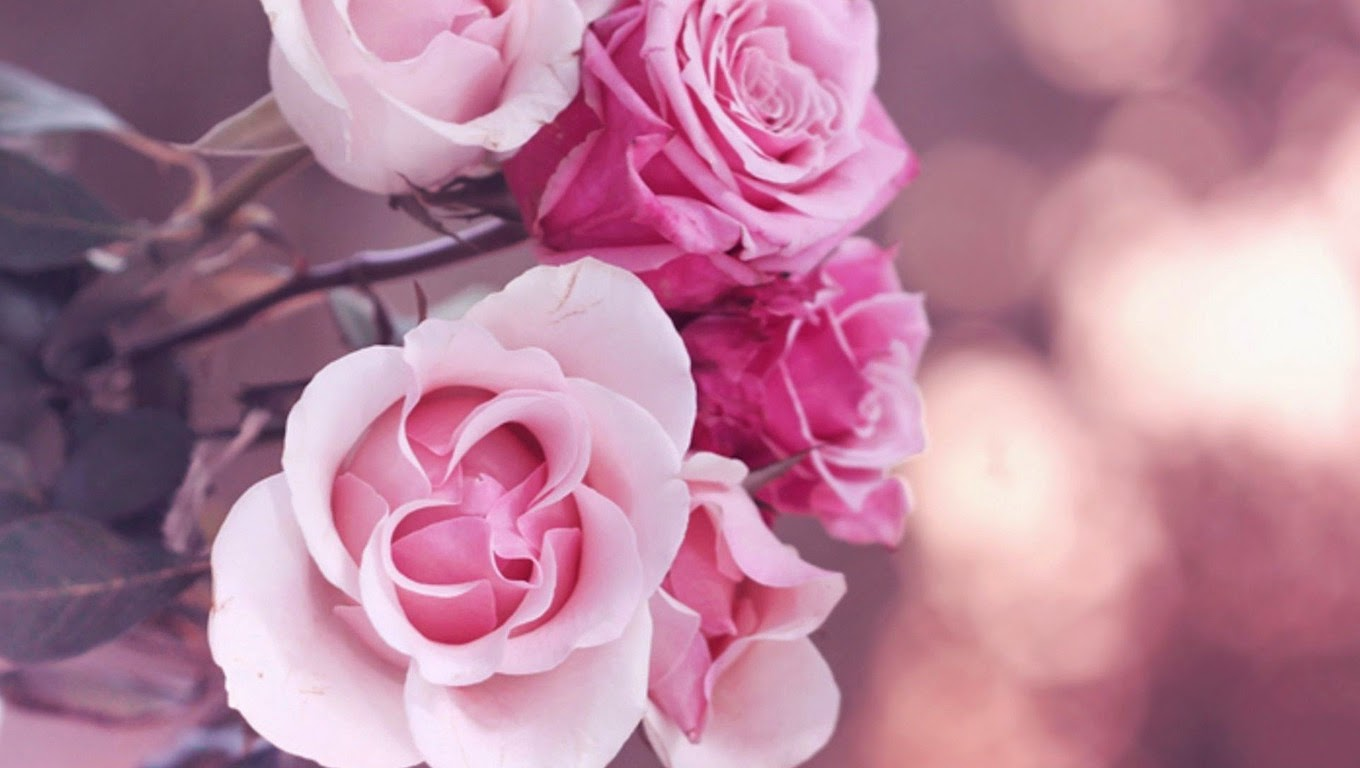 Cashmere rose colour trend fall 2015 pink roses 7799