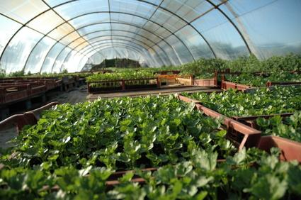 green house ukuran sedang green house dengan biaya pembuatan mahal