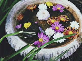 A collection of daisy, chrysanthemum and gerbera flowers floating in the bird bath.
