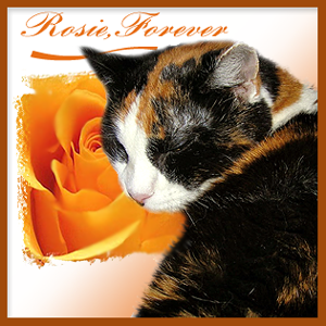 Rosie  RIP