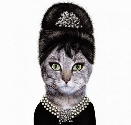 Audrey Hepburn Cat Name