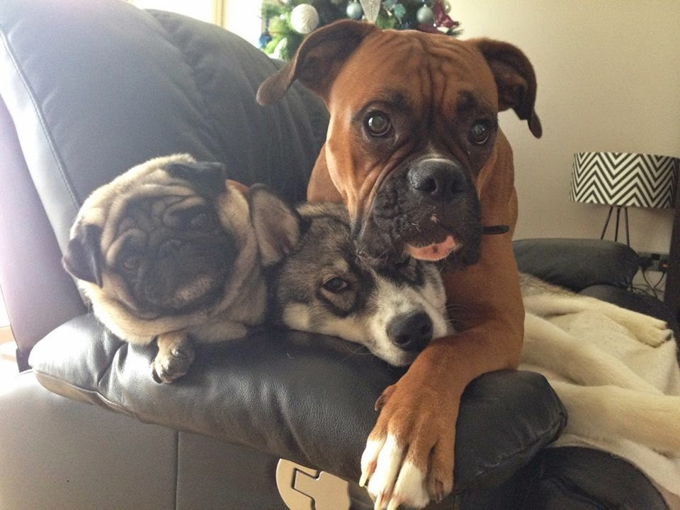 Cute dogs - part 39 (50 pics), funny dogs, dog photos