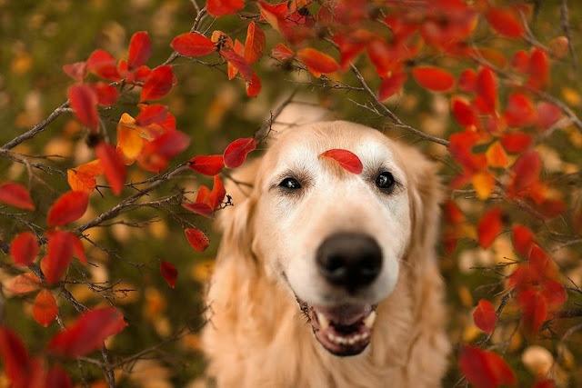 фотоссесия собаки