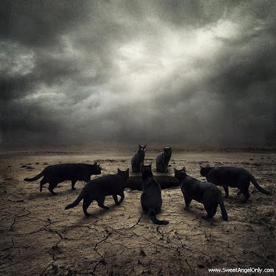 funny_picture_cats_vandanasanju.blogspot.com