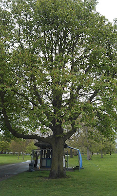 Chestnut Tree Brockwell Park