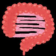 腸のイラスト「大腸・小腸」(人体)