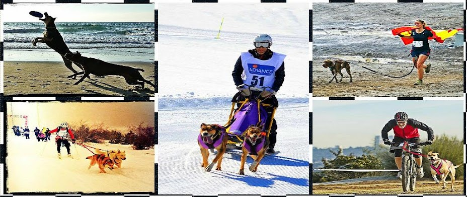CorreCaninos Mushing Trail Madrid