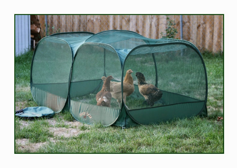 "http://www.amazon.com/gp/product/B00FMH6PVE/ref=as_li_tl?ie=UTF8&camp=1789&creative=390957&creativeASIN=B00FMH6PVE&linkCode=as2&tag=natuchickeep-20&linkId=IPJ2RBQGMAZU2QJQ"">Peck and Play Portable Chicken Enclosure"