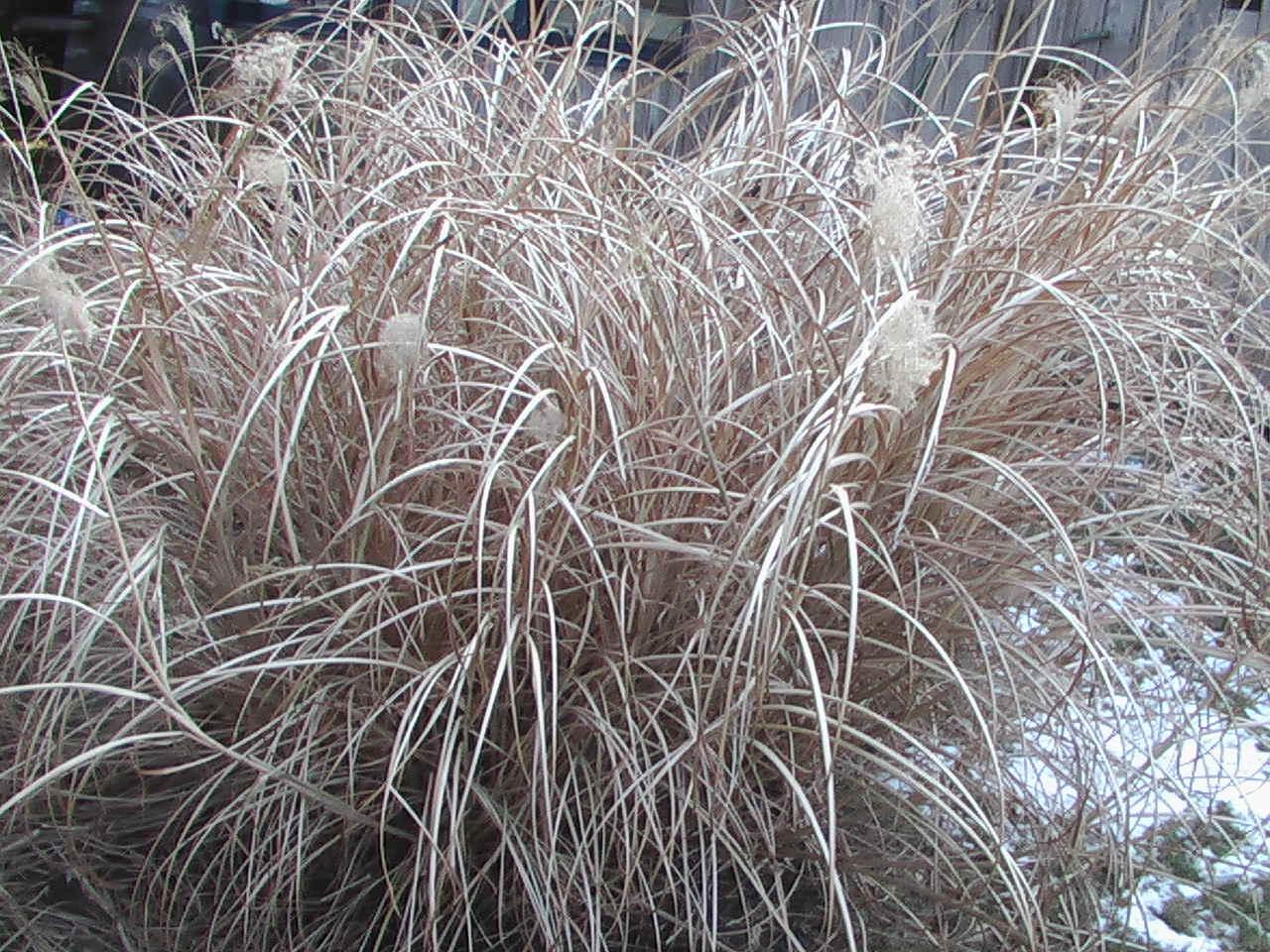 carpe diem haiku kai carpe diem 68 winter grasses fuyu. Black Bedroom Furniture Sets. Home Design Ideas