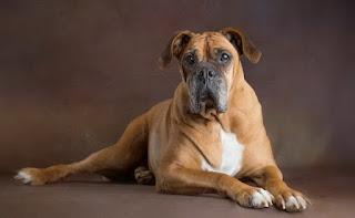 Mascotas Esplendorosas Retratos en Fotos Artisticas