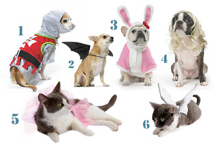 Shopping for Pet Halloween Costumes