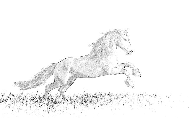 cavallo disegno stampa e colora