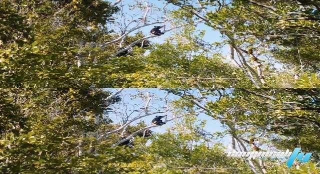 Isla de lemures: Madagascar 3D Latino
