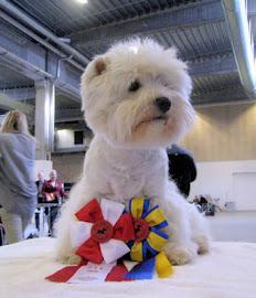 Danish Winner 2010