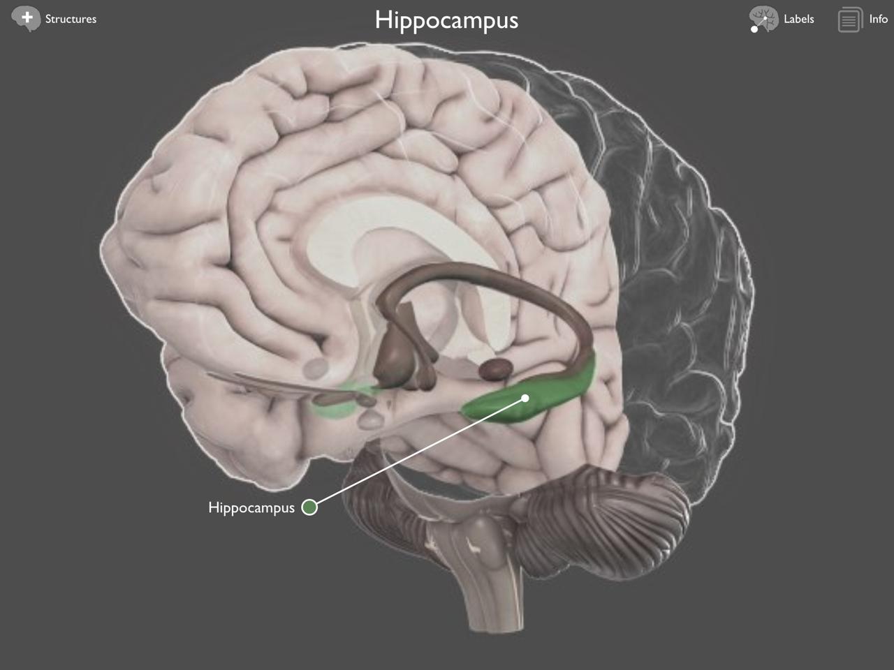 Brain Posts: Brain Hippocampus Atrophy in Traumatic Brain ...