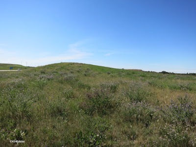 Alberta grassland