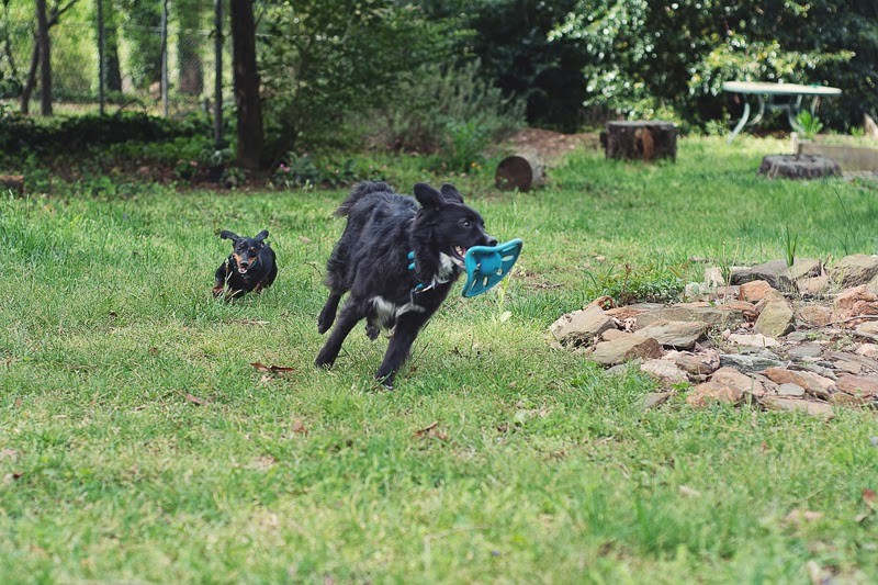 East Atlanta Village Doggy Play Date