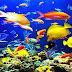Sering Makan Ikan Asin Bisa Aktifkan Virus Epstein-Barr
