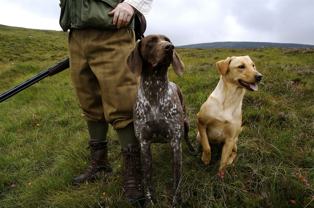 July Hunting Dogs For Sale