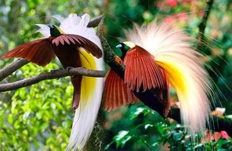 Flora Fauna Flora Dan Fauna Langka Di Indonesia